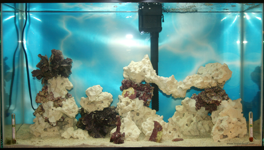 how to get rid of ich in my saltwater tank